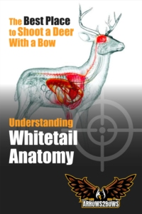 Understanding Whitetail Anatomy