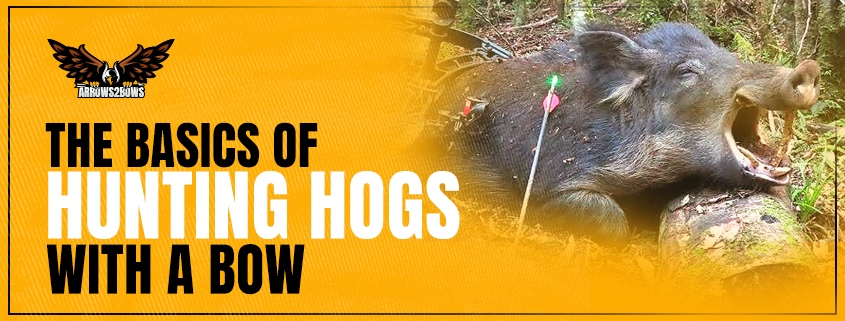 The Basic of Hunting Hogs with a Bow_05122020